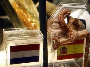 Испанский бизнесмен предлагает за осьминога-предсказателя 30 тысяч евро