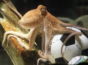 Осьминоги не ошибаются. Испания - Чемпион