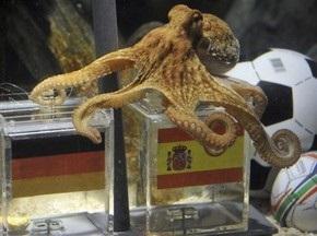 Восьминіг Пол: Бронзовим призером стане Німеччина