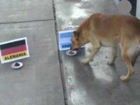 Битва экспертов: Аргентинский пес дал ответ немецкому осьминогу