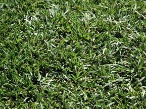 Кабмин планирует построить 700 футбольных мини-полей к Евро-2012