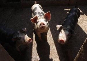 Ъ: Фармацевты заработали на свином гриппе семь миллиардов евро