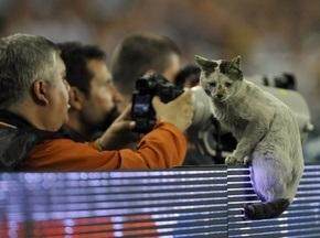 Фотогалерея: Тварини і спорт