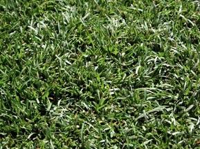 Фотогалерея: Трава навколо дому