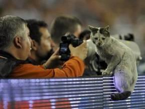 Фанати Шахтаря відправляються до Стамбулу на пошуки фартової кішки