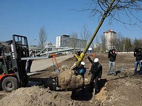 Футболісти Шахтаря посадили дерево в парку Донбас-Арени