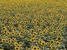 Кернел купил большую агрофирму в центре Украины