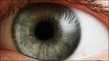 Учені виявили в оці людини другу світлочутливу систему