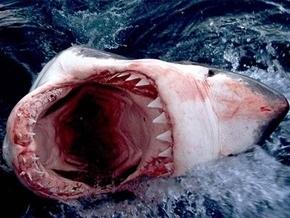Ученые приравняли белых акул к убийцам-психопатам