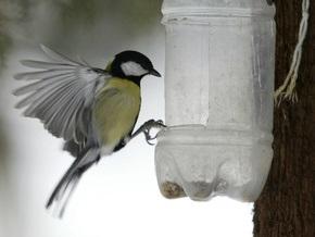 В Британии начался массовый подсчет птиц
