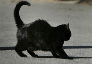 В Британии кошка с банкой на голове сама пришла к спасателям