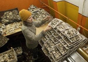 Правила среза. Как правильно собирать грибы в Украине, не рискуя отравиться