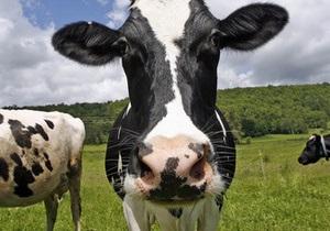 В Китае вывели модифицированных коров, которые дают человеческое молоко