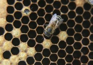 Пчеловоды во Франции собрали зеленый и синий мед