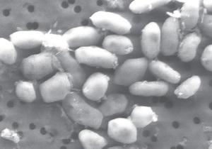 В США создали биокомпьютер из фрагментов ДНК