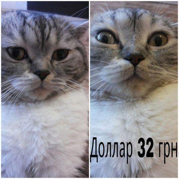 ФОТО: Интернет взорвали фотожабы на пике гривны и Гонтареву