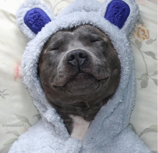 покер собака фото