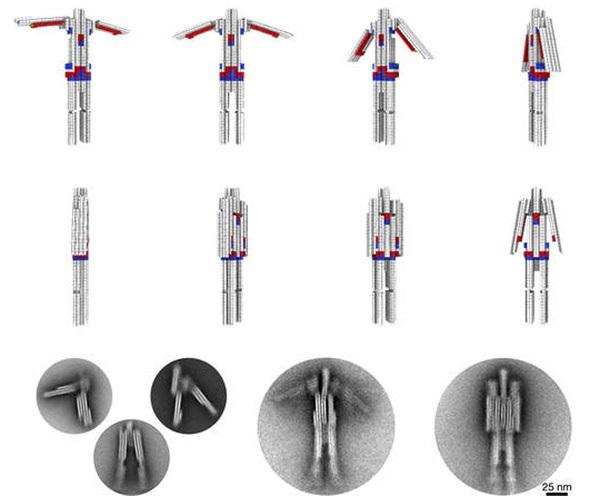 Біотехнологи створили наноробота з молекул ДНК