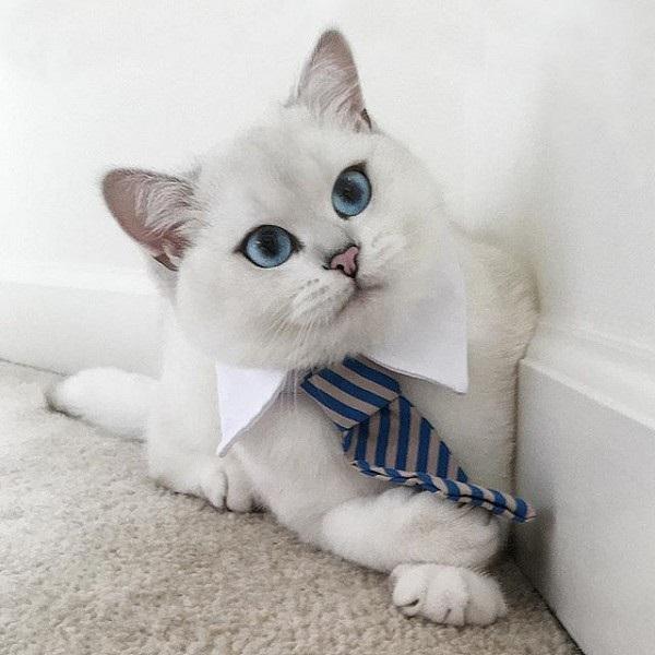 """Кот с """"мультяшными"""" глазами покоряет просторы Интернета"""