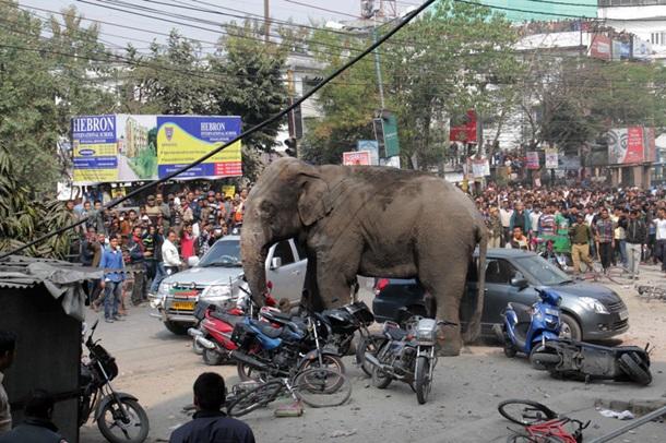 Взбесившийся слон и стрельбища военных: фото дня
