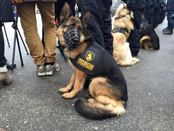 Хвост Тимошенко, форма полицейских псов: фото дня