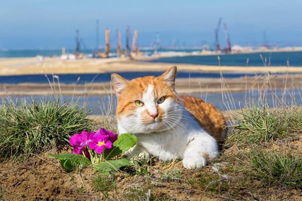 Кот талисман моста