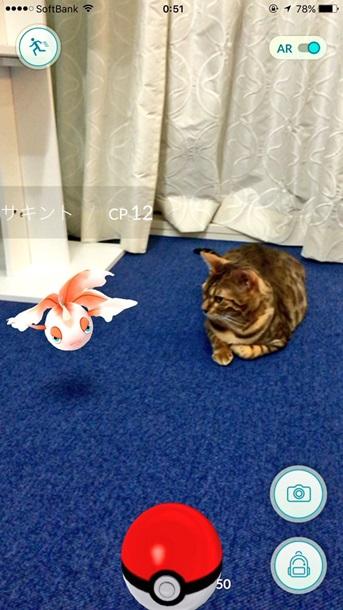 Японские животные научились видеть покемонов