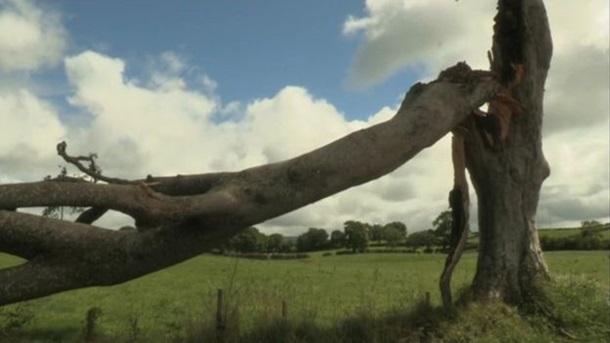 В Британии упало прославленное Игрой престолов дерево