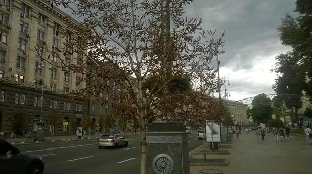 ВКиеве наКрещатике засохли каштаны