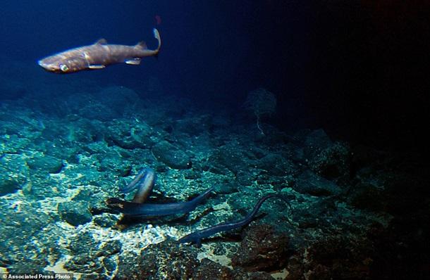 В глубоководном вулкане нашли необычных животных