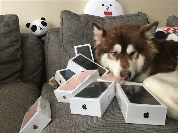 """Китайский """"мажор"""" купил собаке восемь iPhone 7"""