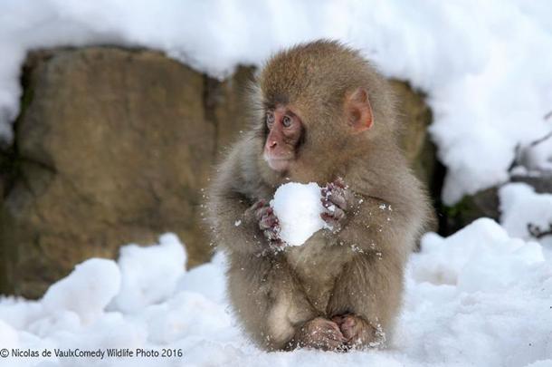 На конкурсе выбрали самые смешные снимки животных