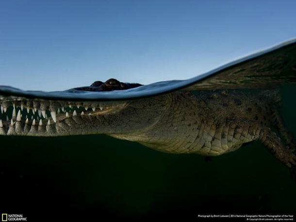 National Geographic показал лучшие фото природы - Фото