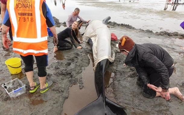 Неменее 400 дельфинов выбросились наберег новейшей Зеландии