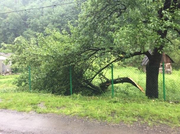 НаЗакарпатье пронесся ураган: повалены деревья исорвана крыша