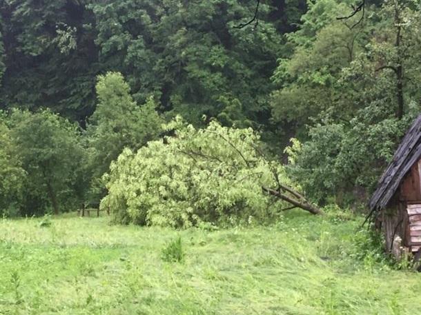 Вырваны деревья, подтоплены дома, повреждены крыши— циклон наЗакарпатье