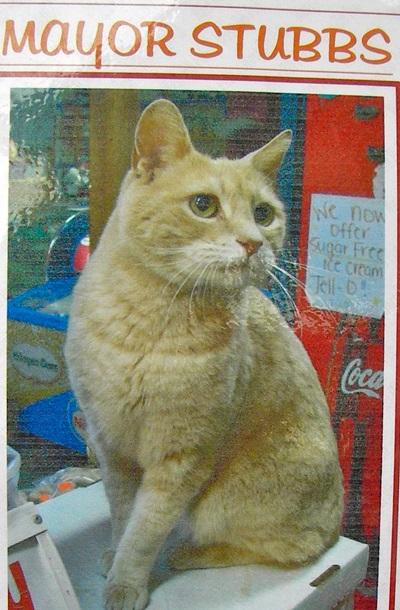 Помер кіт-мер міста на Алясці