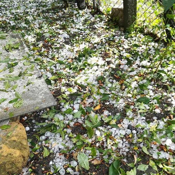 Град размером сперепелиное яйцо уничтожил фруктовые деревья вКрыму