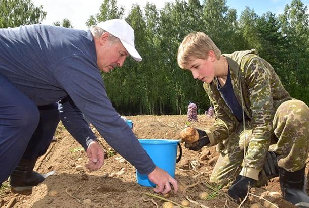 Лукашенко всубботу копал картошку насвоем участке