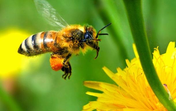 Пчелы обладают одной из типично  человеческих  способностей - ученые