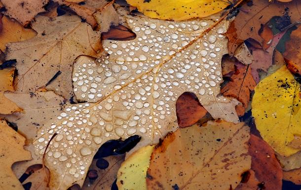 7 ноября Украина проведет в объятиях влажного и прохладного воздуха из Атлантики