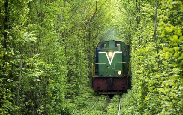 Ровенская область - тоннель - Клевань - вырубка - Природный тоннель любви в Ровенской области может исчезнуть