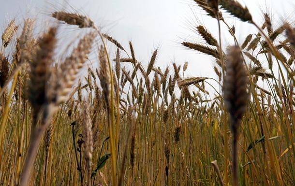 Дело пахнет миллиардами. Корреспондент изучил  сладкие горизонты  и коррупционные риски зернового договора Украины и Китая