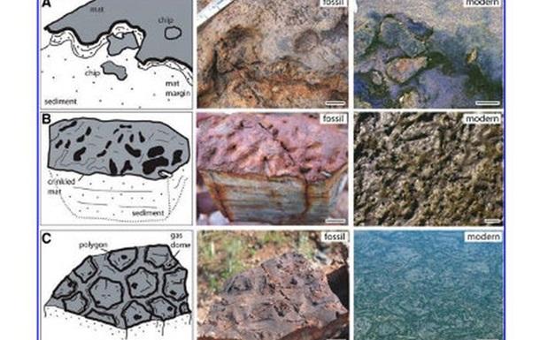 В Австралии нашли древнейшие окаменелости