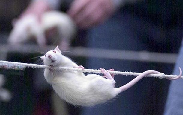 Японским биологам удалось вылечить мышей от паралича