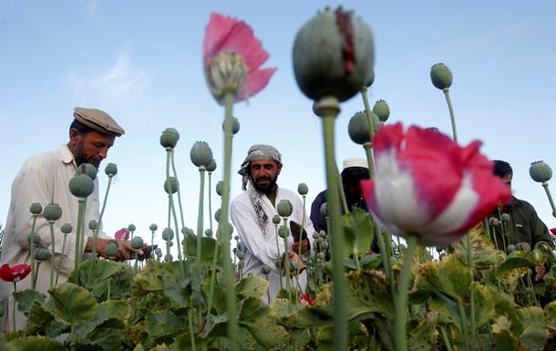В Афганистане вырастили рекордный урожай опийного мака