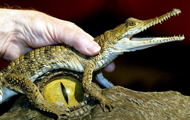 Немецкому зоопарку пришлось дать крокодилу Фиделю новое имя из-за жалоб посетителей