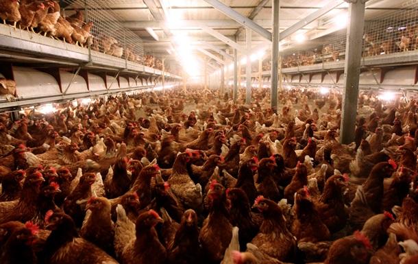 Крупнейший украинский производитель курятины почти на 50% сократил прибыль по итогам девяти месяцев