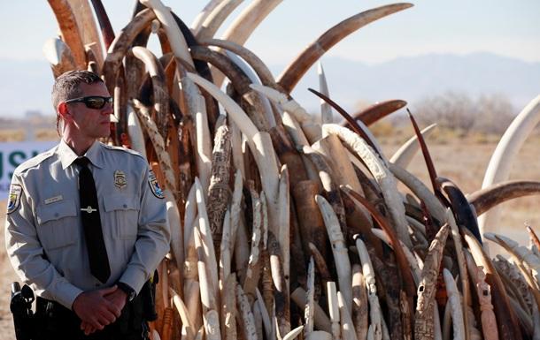 В США уничтожили шесть тонн слоновой кости, конфискованной у контрабандистов
