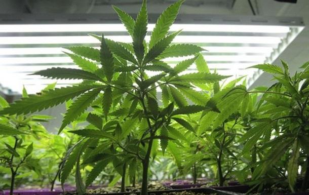 В канадском доме престарелых Forever Young обнаружили свыше полутысячи кустов марихуаны